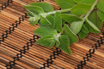 Mint twigs on wooden mat