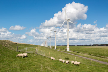 Dutch pasture with sheep and windturbines with cloudsky