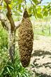 Obrazy na płótnie, fototapety, zdjęcia, fotoobrazy drukowane : apicoltura
