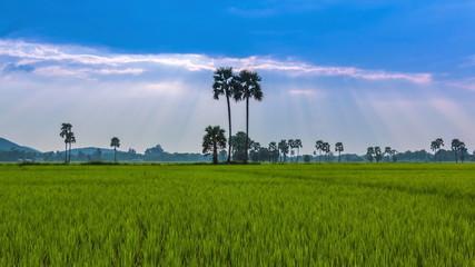 Rice Farm Landscape And Beautiful Sunbeam Time Lapse