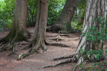 Roots of the trees in the forest
