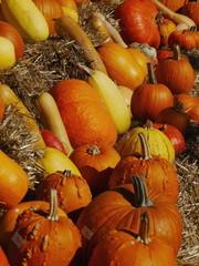 pumpkin straw