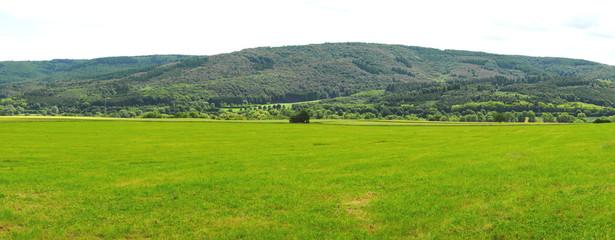 Wald und Wiese Panorama