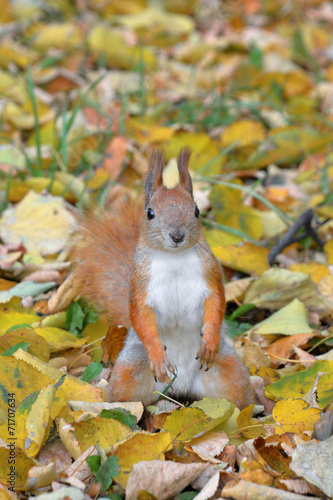In de dag Eekhoorn Funny squirrel in autumn forest