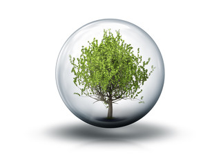 bubble with a tree