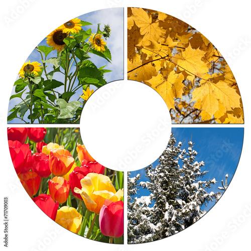Foto op Plexiglas Tulp Vier Jahreszeiten