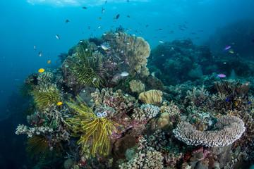 Diverse Coral Reef