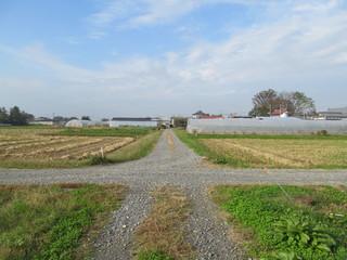 未舗装路の十字路