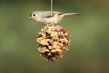 Bird On A Suet Feeder