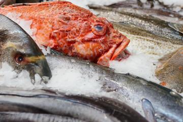 Fish and seafood on market display