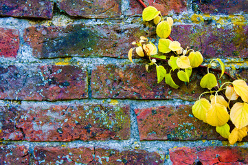 Autumn leaves against red brick wall, natural frame background
