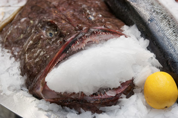 Monkfish on market display