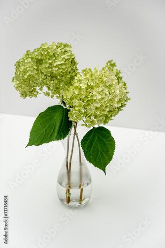 Staande foto Hydrangea Hydrangea in a vase