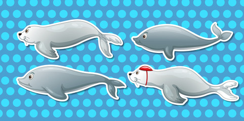 Otter and dolphin