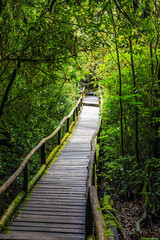 Wooden bridge in tropical rain forest