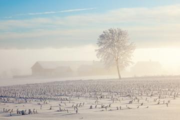 Foggy farm landscape
