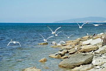 Seagulls on a rocks