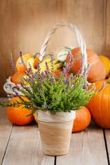 Heather (Calluna vulgaris) and pumpkins