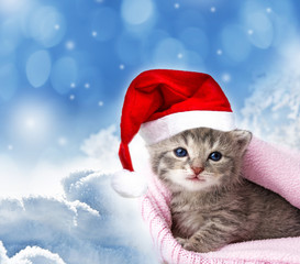 cute newborn kitten with santa cap