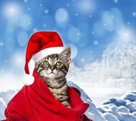 cute kitten with a red santa cap