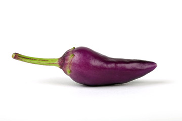 Eine violette Chili-Schote