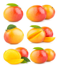 set of 6 mango images