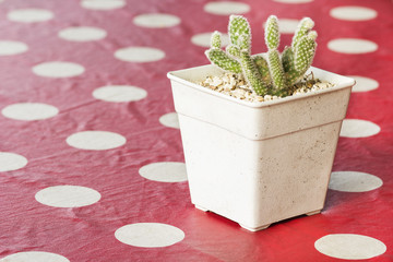 Small cactus in a pot on red tablecloth