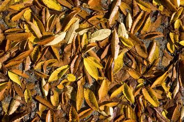 落葉でいっぱいの地面