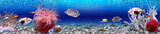 Underwater world - panorama - Fine Art prints