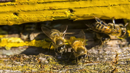 Guard Bees Meeting Working Bee