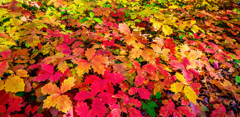 Wonderful carpet of  autumn foliage.