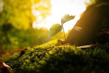 Junger Trieb im Wald