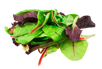 Mixed salad baby red leaf, baby spinach & red chard isolated