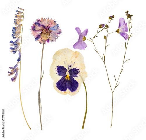 Staande foto Lente Set of wild dry pressed flowers and leaves