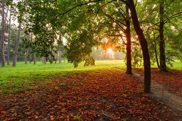 Tree in autumn park