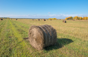 Autumn field in countryside. Haymaking time in Central Russia