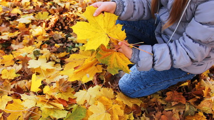 hands teen girl collect yellow leaves at autumn park, closeup