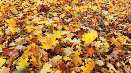 autumn leaves fall from top to ground at each other