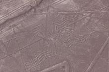 """Постер, картина, фотообои """"Nazca lines - Spider"""""""