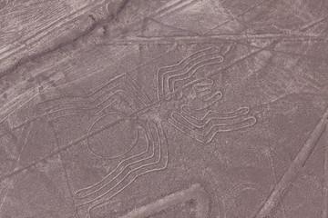 Nazca lines - Spider