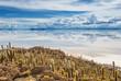 Incahuasi island, Salar de Uyuni, Bolivia - 71736605