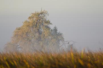 Autumn on a Foggy Silent Morning in the Marsh