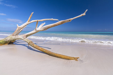 Drift wood on tropical beach