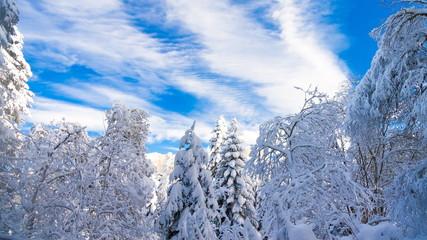 winter  day Christmas  landscape