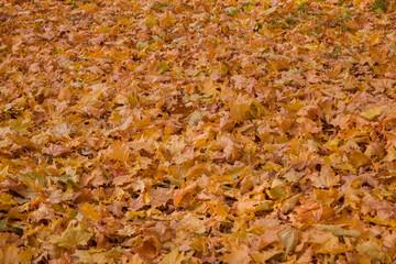 Аutumn leaves