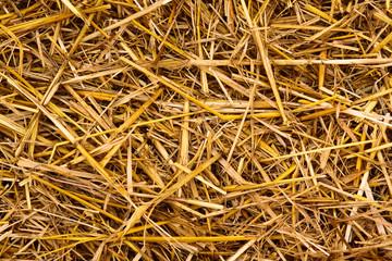 Golden hay straw texture