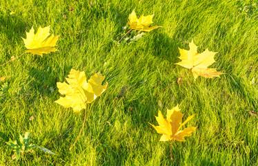 fallen leaves on a green grass.