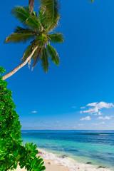 Palms Bay Summertime