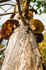 funghi sul tronco