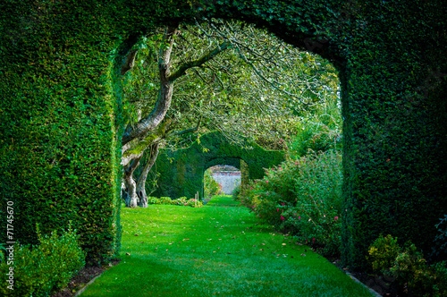 Green plant arches in english countryside garden - 71745670